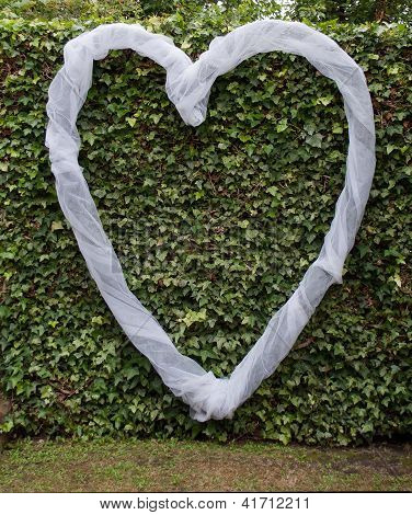 Love Heart Over Green Ivy