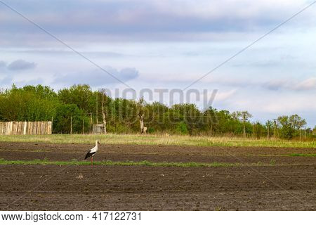 Stork And Freshly Plowed Field In Spring. Farmland. A Close-up Of Furrows In A Freshly Plowed Field.