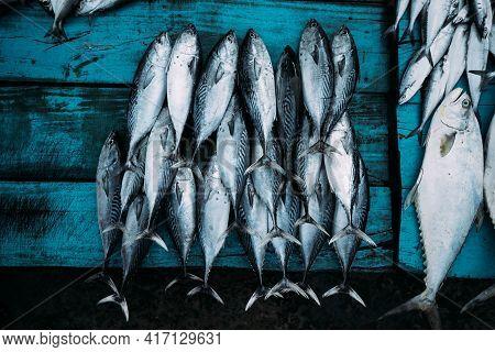 The Market For Marine Fish. Street Market. Sale Of Fresh Fish. Freshly Caught Fish. Fish Shop. Produ