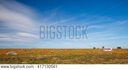 Deserted Trailer Camper In California Golden Orange Poppy Field During Superbloom Spring In Southern