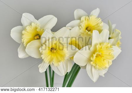 Daffodils. White And Yellow Narcissus Bouquet. Countryside Nature.