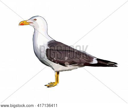 Seagull From A Splash Of Watercolor, Colored Drawing, Realistic. Vector Illustration Of Paints