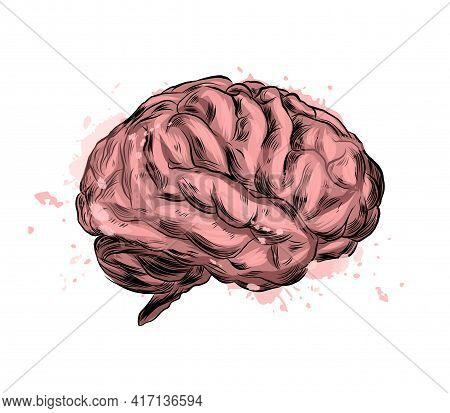 Human Brain From A Splash Of Watercolor, Colored Drawing, Realistic. Vector Illustration Of Paints