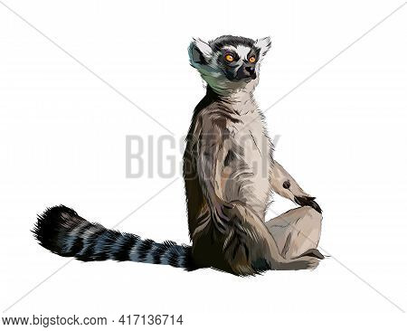 Lemur From A Splash Of Watercolor, Colored Drawing, Realistic. Vector Illustration Of Paints