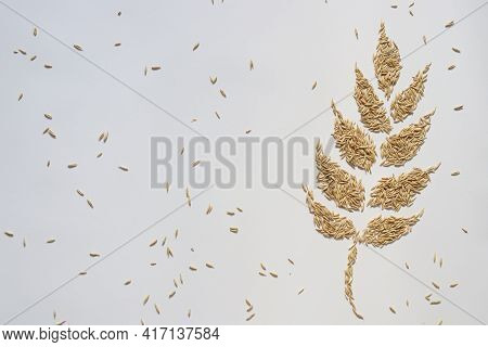 Spikelet From Grains. Oat Grains. On A White Background. Copy Space.