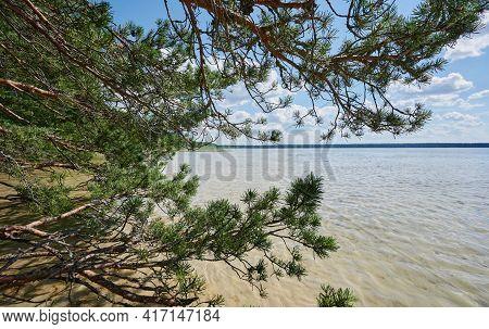 Fir Tree In Lake Beach