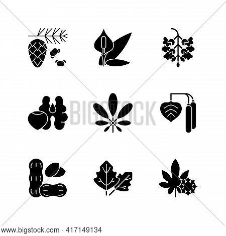 Allergens And Allergy Causes Black Glyph Icons Set On White Space. Cedar, Pine Tree Pollen. Peace Li