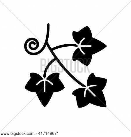 English Ivy Black Glyph Icon. Hedera Helix, Vine. Crawling Flowering Plant. Cause Of Allergic Reacti