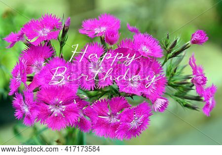 Happy Birthday. Birthday  Love Card Concept With Pink Flowers In The Garden.