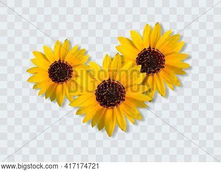 Realistic Sunflower Bouquet, Sunflower Flowers. Seasonal Sales