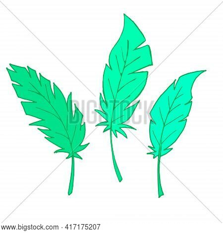 Set Of Feathers. Isolated Feathers On A White Background. Outline Illustration. Vector. The Green Fe