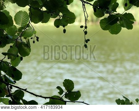 Macro Photo Showing Fresh Spring Hazel Sprigs Against A Water Background