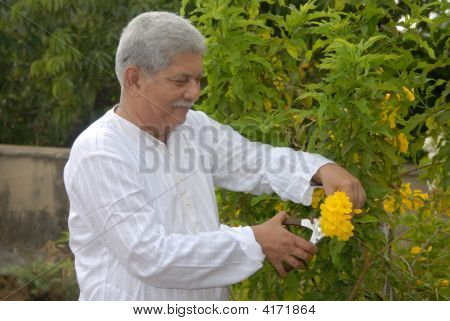 A Senior Citizen Relaxing In The Garden Cutting Plants.