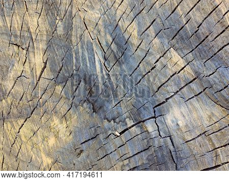 Background. Closeup Of A Cross Section Of Tree Trunk. Cross Sectional Image Of Tree Trunk With Patte