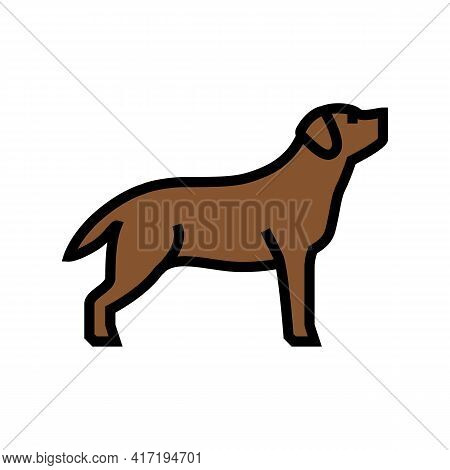 Labrador Retriever Dog Color Icon Vector. Labrador Retriever Dog Sign. Isolated Symbol Illustration