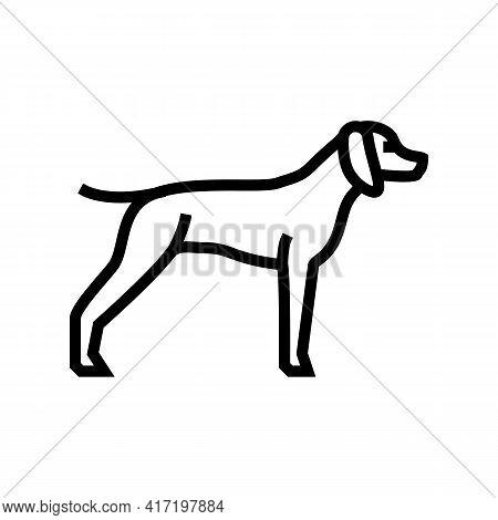 German Shrothaired Pointer Dog Line Icon Vector. German Shrothaired Pointer Dog Sign. Isolated Conto