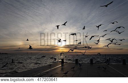 Halo On The Sky And Seagulls Flying Above The Sea