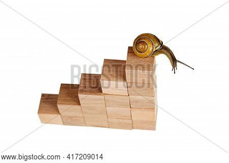 Snail Sitting At The Top Of The Career Stairs. Concept Of Personal Development, Career , Changes, Su