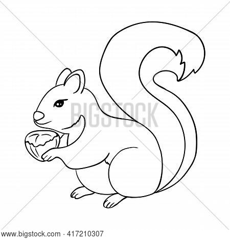 The Squirrel Is Holding A Hazelnut. Coloring Page. Squirrel Black Outline On White. Vector