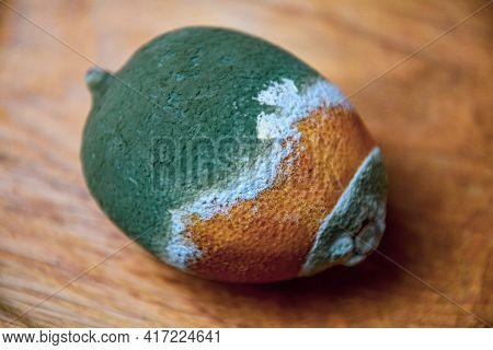 Soft Focus To Green Grey Moldy Lemon Fruit Atop Wooden Background. Damaged Perishable Food. Rotting