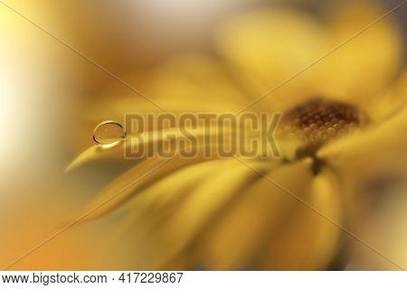 Beautiful macro shot of magic flowers.Border art design. Magic light.Extreme close up macro photography.Conceptual abstract image.Yellow Background.Fantasy Art.Creative Wallpaper.Beautiful Nature Background.Amazing Spring Flowers.Water drop.