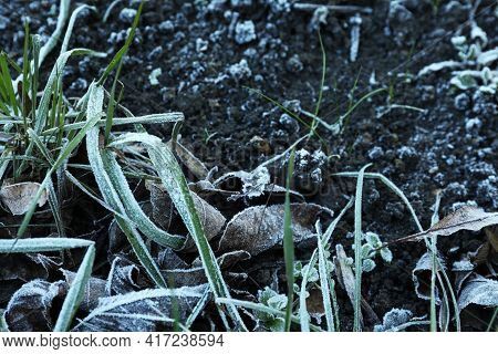 Green Grass And Dry Leaves Covered With Hoarfrost On Ground