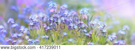 Little Blue Spring Flowers, Veronica Speedwell. Springtime Garden With Beautiful Blue Flowers.