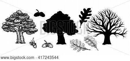 Oak With Leaves And Winter Oak Without Leaves. Silhouette Of An Oak Tree. Vector Hand Drawn Illustra