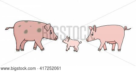 Cute Pink Pigs Family. Father, Mother Sow And A Piglet Are Walking Somewhere, Side View. Farm Animal