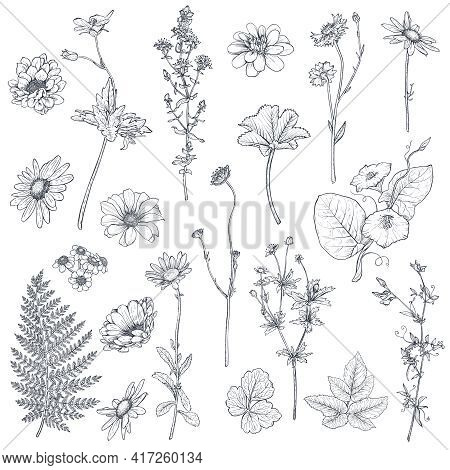 Vector Collection Of Hand Drawn Flowers And Herbs