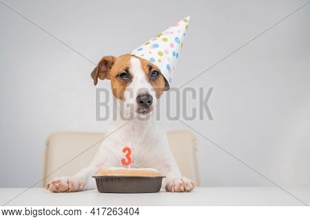 Jack Russell Terrier In A Festive Cap By A Pie With A Candle On A White Background. The Dog Is Celeb