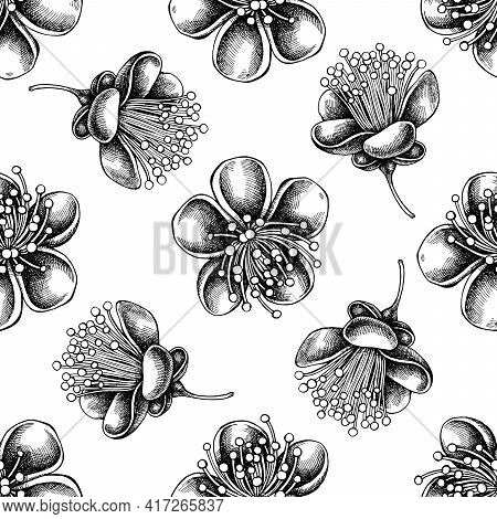 Seamless Pattern With Black And White Feijoa Flowers Stock Illustration