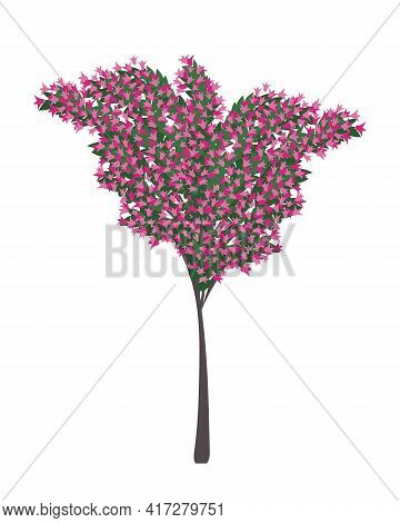 Tree In Blossom. Bougainvillea Tree With Pink Flowers. Typical Mediterranean Plant. Isolated Flat Ve