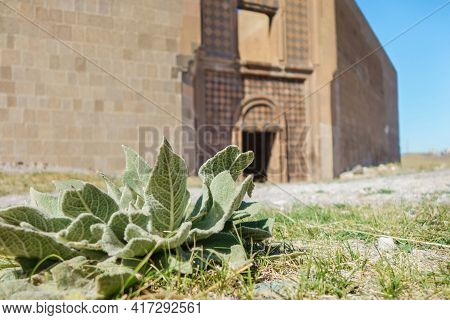 Close Up View Onto Desert Plants, & Restored Remains Of Ancient Seljuk Palace In Medieval City Ani -