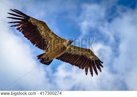 Flying Common Vulture Against A Blue Clowded Sky