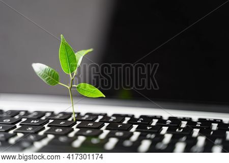 Laptop Keyboard With Plant Growing On It. Green It Computing Concept. Carbon Efficient Technology. D