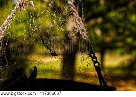 A Dead Spider Silhouette Tangled In A Spider Web Dark Scene