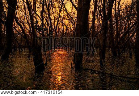 Leafless Tree With Sunlight. Dead Tree In Degraded Mangrove Forest. Environmental Crisis From Climat
