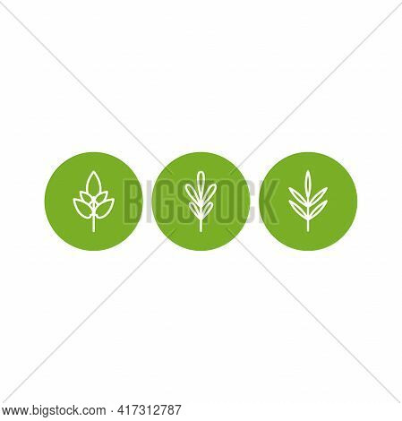 Rosemary, Thyme, Basi. Set Of White Line Twigs, Shoots, Sprigs In Green Circles Isolated. Agricultur