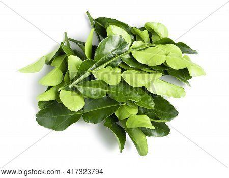 Kaffir Lime Leaves Isolated On White Background