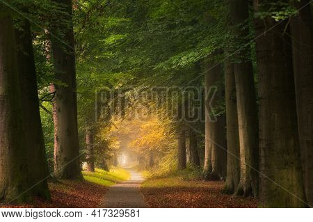 A Pathway In The Middle Of A Forest With Big And Green Leafed Trees