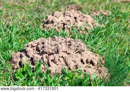 Ground Mounds Made By Gopher . Pile Of Ground On The Grass