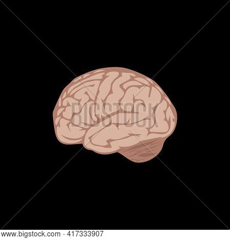 Illustration Vector Design Graphic Of The Human Brain