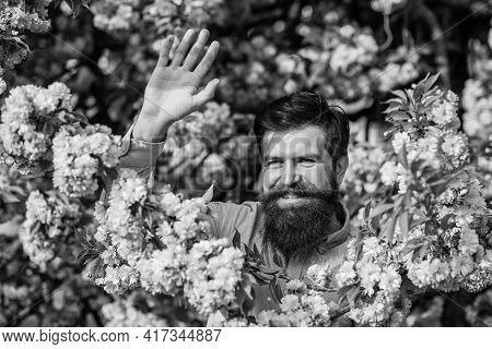 Hello Sunny Spring. Garden With Blossoming Large Cherry Trees. Bearded Man With Fresh Haircut Posing