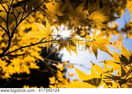 Looking Up At Sun Shining Through Tree Canopy With Shallow Focus - Autumn Theme