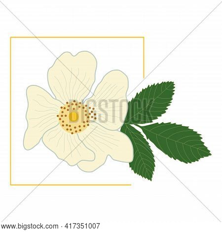 White Rose Hip Flower With Green Leaf In A Yellow Frame. Delicate Petals Of A Blossoming Dog-rose Bu