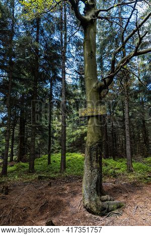 Rudawy Janowickie, Poland - June 11 2020: Wooden Board On A Tree At Skalnik Peak Of Highest Point Of