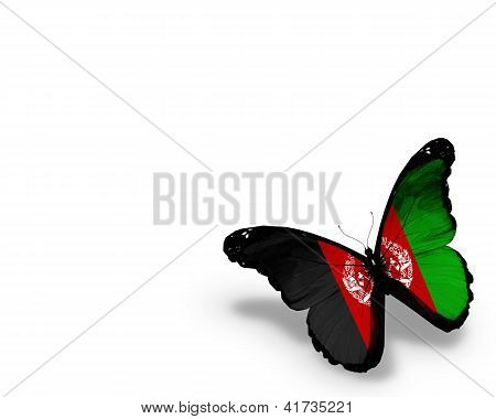 Afghani Flag Butterfly, Isolated On White Background