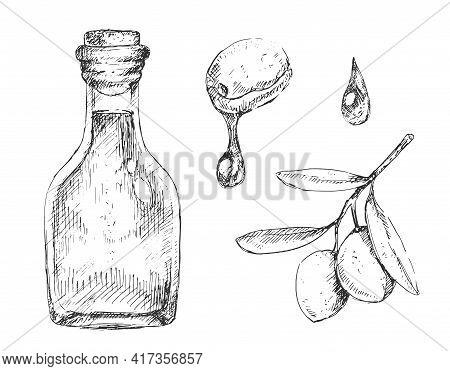 Set Ot Olive Oil Bottle, Drop And Branch In Sketchy Style, Vintage Illustration On White Background