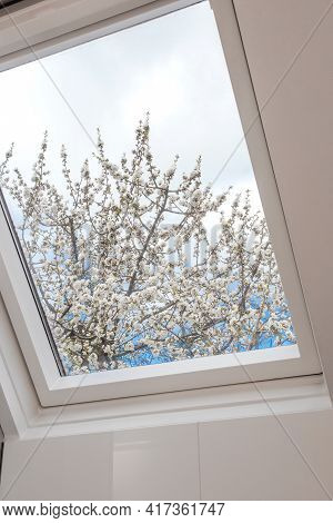 A Modern Open Skylight,mansard Window Against Blue Sky With Beautiful Tree With White Flowers, Moder